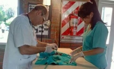 Correa: Se realizó la primer jornada de esterilización de mascotas del año