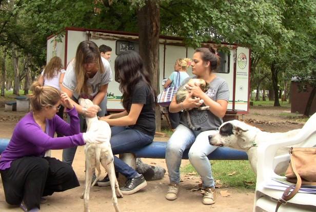 Esterilizaciones de perros y gatos