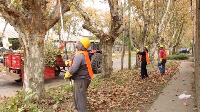 El Municipio inició trabajos de poda y escamonda