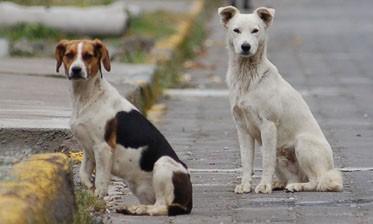 Presentación de un dictamen no vinculante sobre animales en la calle