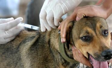 Convocan a veterinarios para campaña de vacunación antirrábica